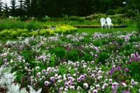 紫竹ガーデン.JPG